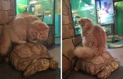 стратегия черепах