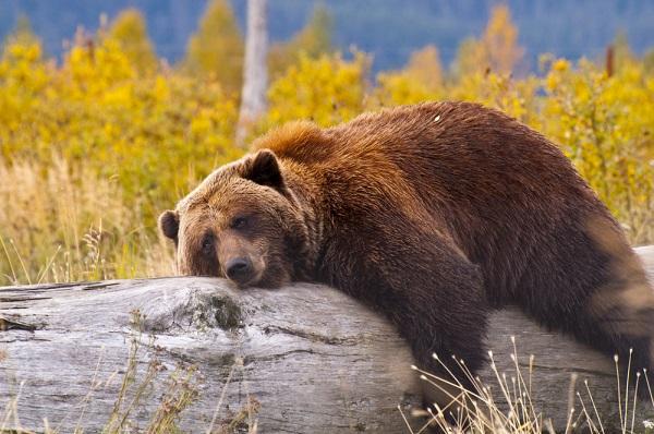 быки и медведи на форексе